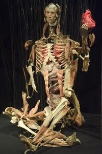 El eje temático versa esta vez sobre el órgano motor del cuerpo humano.