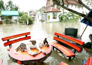 Las intensas lluvias mantienen anegadas extensas áreas del norte y centro de Tailandia.