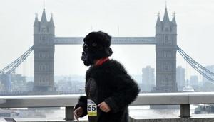 Un hombre vestido de gorila corre frente al Puente de Londres durante la carrera anual de gorilas.
