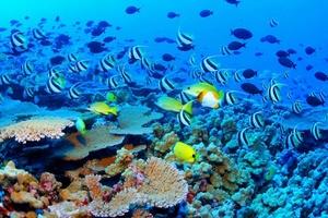 La Gran Barrera de Coral (Great Barrier Reef) es el mayor arrecife de coral del mundo. El arrecife está situado en el Mar del Coral, frente a la costa de Queensland al noreste de Australia, al sureste de Nueva Guinea occidental y al sur de Papúa Nueva Guinea. El arrecife, que se extiende sobre unos 2600 kilómetros de longitud, puede ser distinguido desde el espacio.