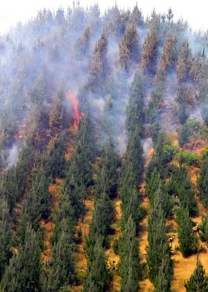 Los incendios forestales, que ya han arrasado más de 55 mil hectáreas en el sur del país.