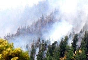 El presidente Sebastián Piñera expresó su dolor por la tragedia y anunció además la presentación de una querella criminal, apelando a la aplicación de la llamada 'Ley Antiterrorista' en contra de quienes resultaran responsables de los incendios forestales.