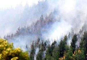 Una brigada de 10 voluntarios fue cercada por el fuego cuando combatía las llamas en Carahue, localidad de la provincia de Cautín, a unos 700 kilómetros al sur de Santiago.