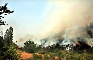 Al menos seis brigadistas que combatían un incendio forestal en la sureña localidad chilena de Carahue murieron atrapados por las llamas.