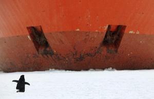 El buque permanece detenido incrustado en una placa de hielo mientras se espera que mejoren las condiciones climatológicas para poder acercarse a la Cabaña en helicóptero.