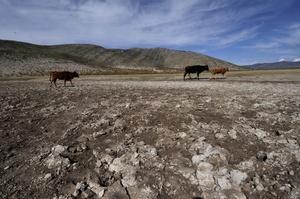 Animales buscan agua en el lugar donde quedaba una inmensa laguna en el municipio de Puerto Grande, estado de Nuevo León (México).