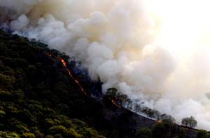 El incendio fue originado por la quema de un basurero ilegal en el área de Arenales Tapatíos, cercana al bosque, y el fuerte viento propició que el fuego se extendiera hacia la zona forestal.