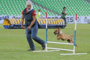 Como parte del evento, hubo también una carrera de perros.