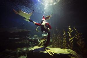 Un cuidador disfrazado de Papá Noel ofreció un almuerzo especial de Navidad a los animales marinos del zoológico de Chinag Mai, Tailandia.