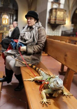 Una mujer acudió a bendecir a su iguana en la iglesia de San Pablo de Zaragoza.