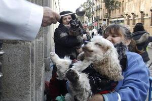 Se realizó la tradicional bendición de mascotas con motivo del Día de San Antón, patrón de los animales en España y el Vaticano