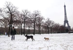 París se tiñó de blanco una una fuerte nevada que dejó una increíble vista de los monumentos más emblemáticos de la capital francesa.