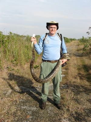 Fotografía donde aparece el biólogo Kevin Enge con una pitón birmana. Un total de 21 pitones han sido capturadas en los Everglades en la primera semana del concurso organizado en Florida para tratar de reducir la población de estas serpientes, que no son naturales de la zona y están arrasando la fauna autóctona de este delicado ecosistema.
