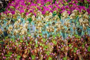 """Los """"blocos"""", como son conocidas las comparsas carnavalescas que, animadas por orquestas, arrastran a multitudes a las calles para bailar, cantar y divertirse, fueron la principal atracción."""