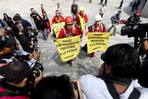 Activistas de Greenpeace México escalaron la Estela de Luz como protesta en contra del uso del maíz transgénico en los campos del país.