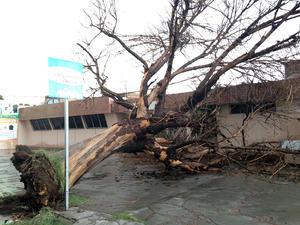 En Torreón se registró la caída de 6 árboles y un espectacular.