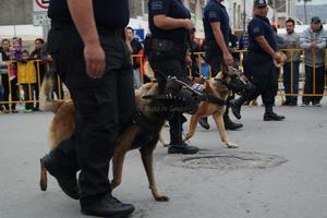 Llamó la atención la participación del escuadrón canino.
