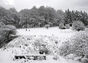 3 de febrero | Irán. El norte del país se cubre de blanco tras una tormenta de nieve, la primera registrada en cincuenta años.