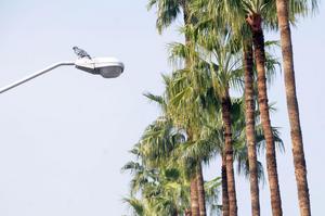 8 de enero   Alumbrado. Autoridades anuncian que ya no repararán el alumbrado público, deciden modernizar con nueva tecnología, las 57 mil lámparas que hay en la ciudad.