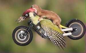Desde John Travolta enfundado en su traje de 'Fiebre de sábado por la noche', hasta animales también 'se treparon en el lomo' del ave.