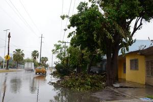 Algunas ramas de árboles han caído al no poder resistir el aguacero.
