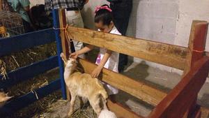 """Los niños y niñas tuvieron la oportunidad de presenciar una exhibición de animales en la """"granjita""""."""