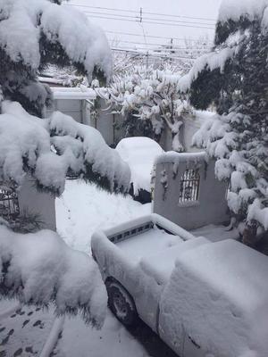 Usuarios de las redes sociales han compartido distintas fotos de la nevada.