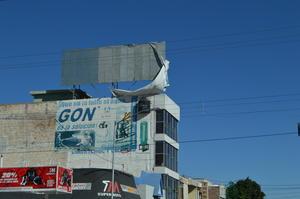 La mayor parte de los daños a causa de los vientos se registró en anuncios espectaculares y árboles.
