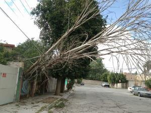Se registraron cortocircuitos por el choque de ramas de palmeras con algunas líneas de la Comisión Federal de Electricidad (CFE).