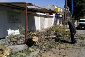 Solamente hubo árboles caídos en el sector rural y urbano de Gómez Palacio.