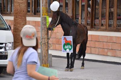 """Los animales traían carteles con la leyenda """"Me quiero jubilar""""."""