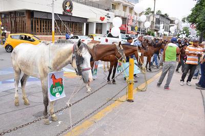 En los alrededores de la plaza, los animales esperaron ante la entrega del proyecto para sus sustitución.