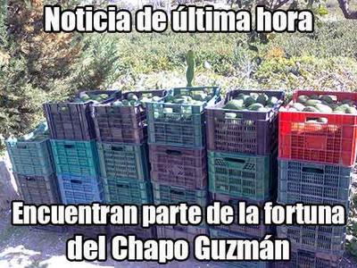 Rumores señalan que la fortuna de 'El Chapo' está basada en kilogramos de aguacate.