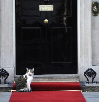 """LONDRES (REINO UNIDO),.- Fotografía de archivo del pasado 16 de enero de 2012 que muestra al gato Larry en las escaleras del número 10 de Downing Street, Londres, Reino Unido. El gobierno ha confirmado hoy 12 de julio de 2016 que el gato continuará viviendo en la residencia, sede del gobierno británico, cuando Cameron abandone el puesto """"ya que forma parte del funcionariado, no de Cameron""""."""