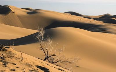 El desierto de Lut, o Dasht-e-Lut, se encuentra al sureste de Irán. Es uno de los muchos destinos que parecen de otro planeta. Durante el verano, es considerada una región abiótica, es decir, totalmente desprovista de vida.