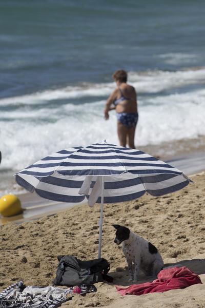 Una perra se protege del sol bajo una sombrilla en la playa de Levante de la ciudad de Barcelona.