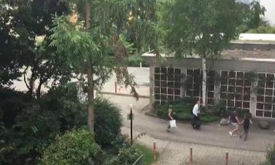 Las primeras imágenes mostraban a los presentes huyendo velozmente tratando de ponerse a salvo.