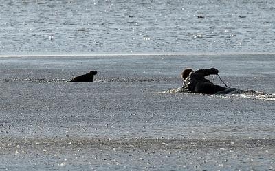 Un hombre rescata un águila de cola blanca atrapada el fango, cerca de la reserva natural Karsiborskie Ferns en la isla de Usedom, en la laguna Szczecin (Polonia).
