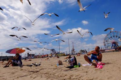 Gaviotas intentan robar comida a las personas en una playa, en el barrio de Coney Island de Brooklyn, Nueva York.