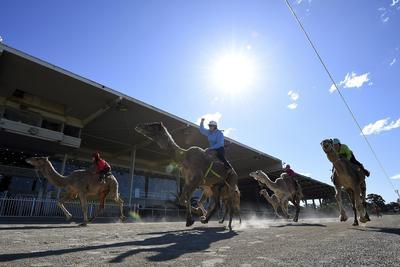 Participantes compiten durante el Festival de Carreras de Camellos de Sídney en Bankstown Paceway.