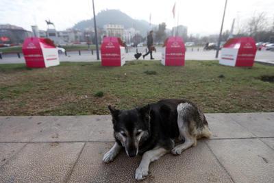 Perros permanecen por el centro de Santiago (Chile) durante la celebración del Día Mundial del Perro Callejero.