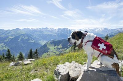 Perros San Bernardo y sus dueños se reúnen durante la reunión de perros San Bernardo de la Fundación Barry en la montaña Stanserhorn en Stans, Suiza.