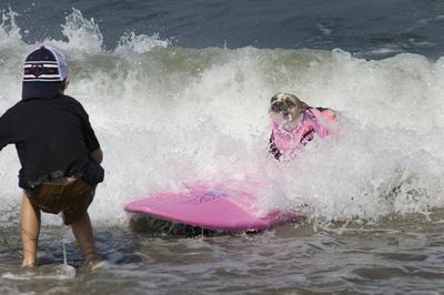 Un niño observa mientras un perro surfea durante un campeonato canino de surf organizado por la compañía Petco, en Imperial Beach, California (Estados Unidos).