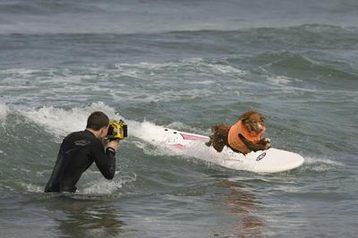 Vista de un perro surfeando durante un campeonato canino de surf organizado por la compañía Petco, en Imperial Beach, California (Estados Unidos).