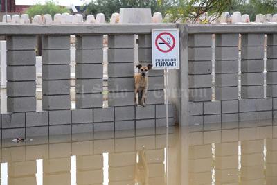 El agua volvió a inundar la zona afectada del pantón Jardines del Carmen.