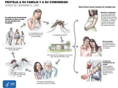 Poster preparado por los Centros de Control y Prevención de Enfermedades (CDC) de Estados Unidos que muestra cómo se transmite el zika.