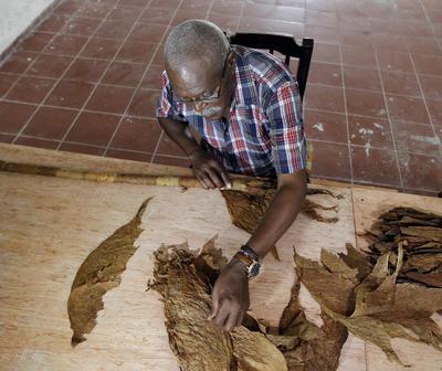 """El tabaquero cubano José Castelar Cairo, conocido como """"Cueto"""", confecciona hoy, 4 de agosto de 2016, un nuevo habano gigante con el que intentará romper su anterior marca de 81,80 metros de largo, establecida en 2011, y así alcanzar el sexto Récord Guinnes de su carrera al puro más grande del mundo."""