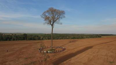 """Fotografía cedida por la ONG """"A Todo Pulmón Paraguay"""" de uno de los árboles más grandes de Paraguay, que participa en el concurso """"Colosos de la tierra"""", donde se quiere condecorar cinco ejemplares de especies nativas de la región oriental del país para fomentar el vínculo entre el hombre y la naturaleza, con un trasfondo de crítica hacia la deforestación del territorio."""