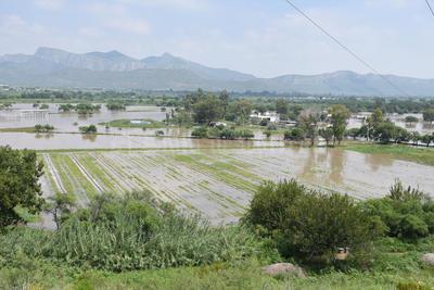 Se 'come' cultivos. Algunas cosechas de Ciudad Juárez, Durango, ya fueron alcanzadas por la avenida del río Nazas.
