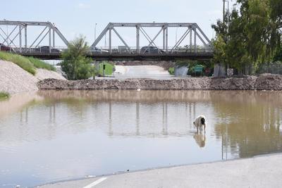 Nada lo detiene. En Torreón, a la altura del puente plateado, un tope colocado ya fue rebasado por la fuerza del padre Nazas.